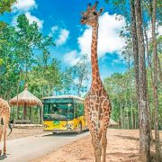 Vinpearl Safari Gia Lâm