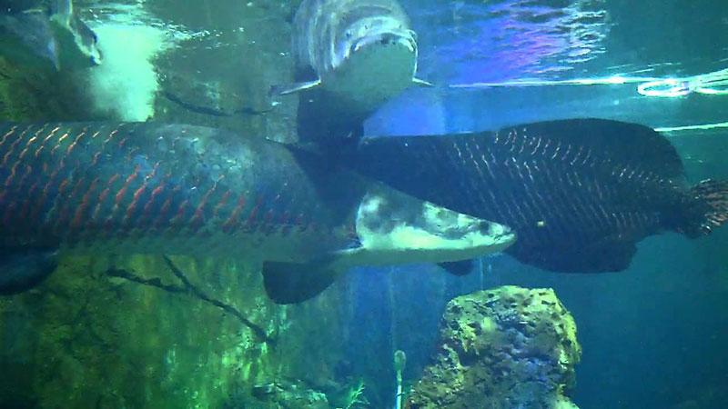 ca-hai-tuong-vinpearl-aquarium-times-city