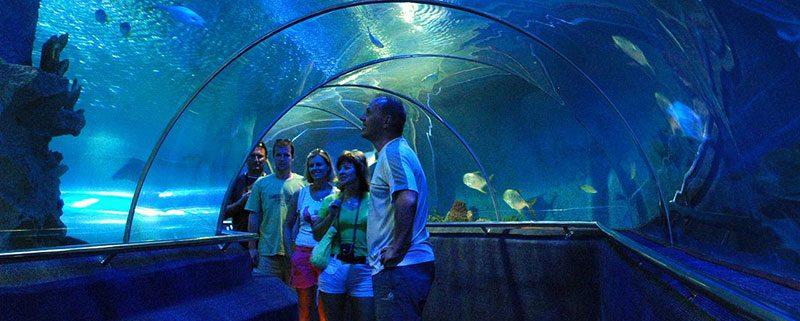 vinpearl-aquarium-times-city